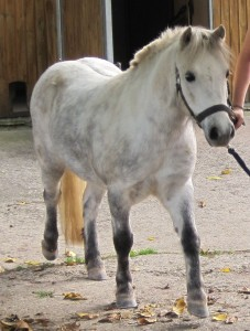 Pony Flori