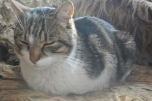 Katzen_2